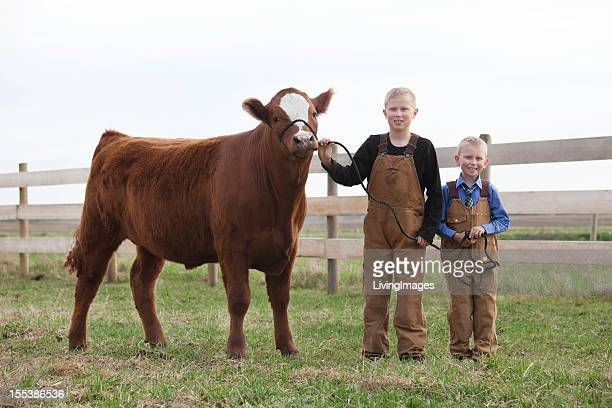 boys with their calf - calf stock pictures, royalty-free photos & images