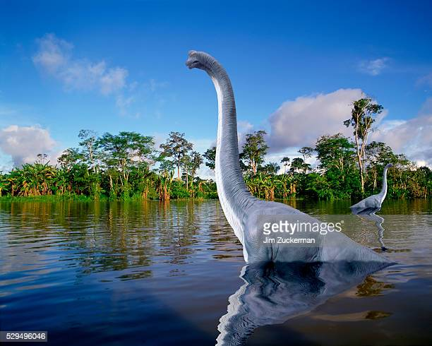 brachiosaurs in a swamp - sauropoda stock pictures, royalty-free photos & images