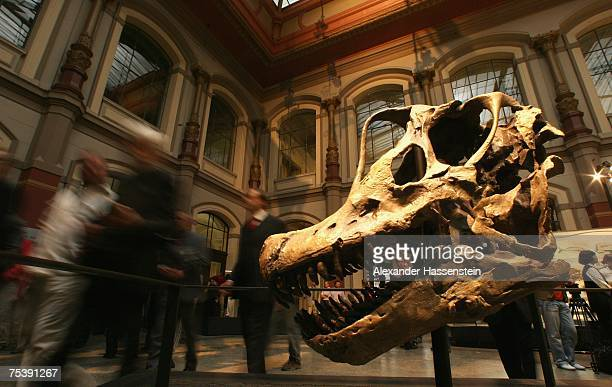 Brachiosaurus skull is seen at the new rooms 'Evolution in Action' at the Museum of Naturkunde The Natural History Museum in Berlin on July 13 2007...