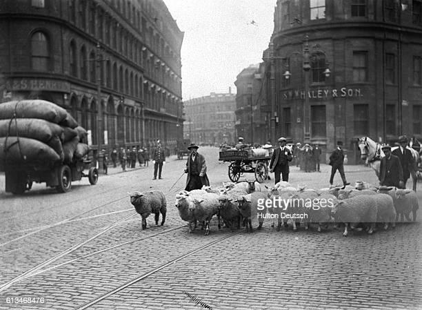 Bradford Views Some Sheep In Leeds Road
