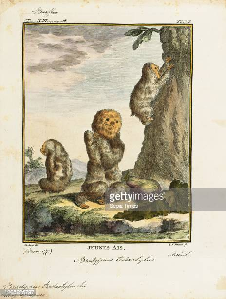 Bradypus tridactylus. Print. The pale-throated sloth is a species of three-toed sloth that inhabits tropical rainforests in northern South America....