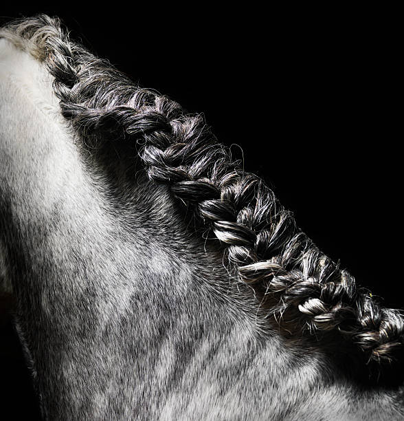 Braided mane of grey horse