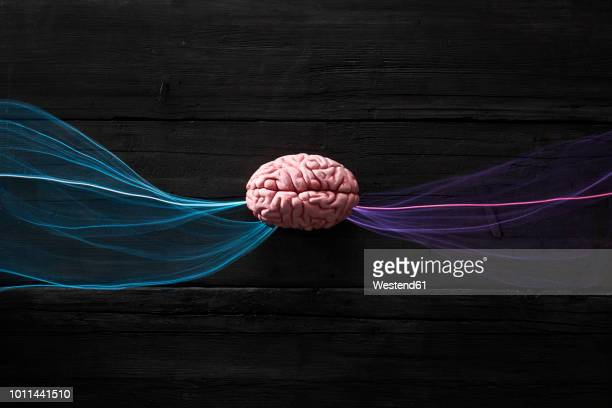 brain and light waves symbolizing data flow - deep learning stock photos and pictures