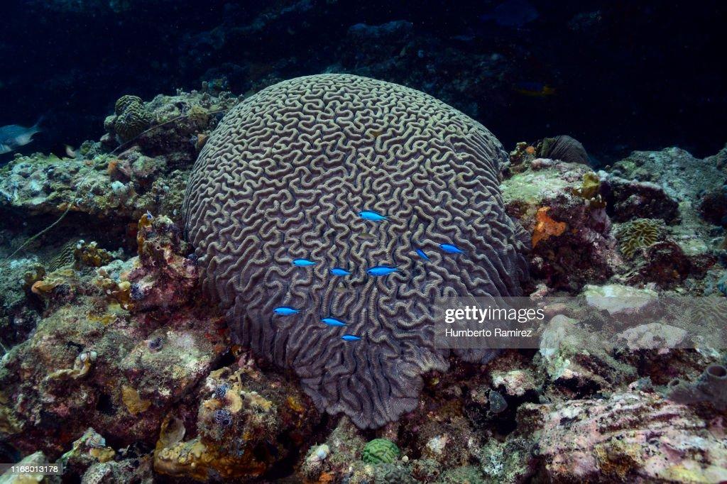 Brain Corals. : Stock Photo