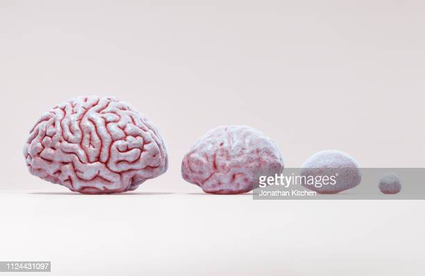 brain evolution - evolução - fotografias e filmes do acervo