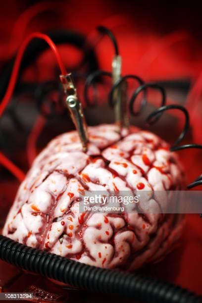 Cerveau expérience