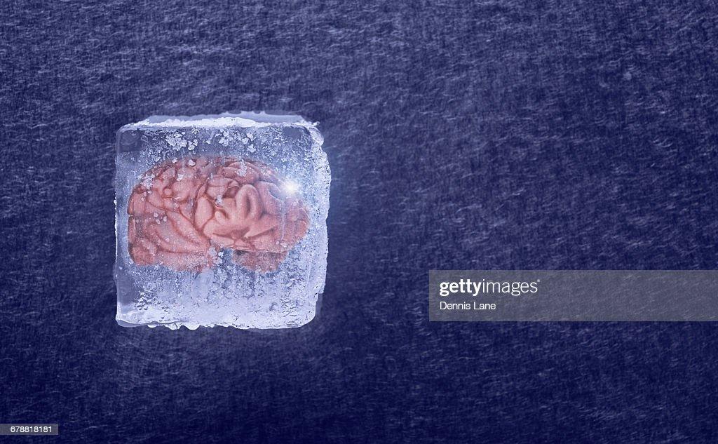 Brain frozen in ice cube : Stock Photo
