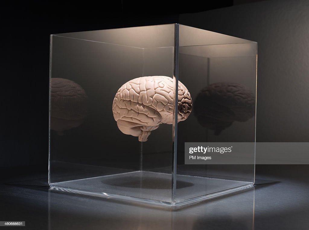 Brain in a box : Stock Photo