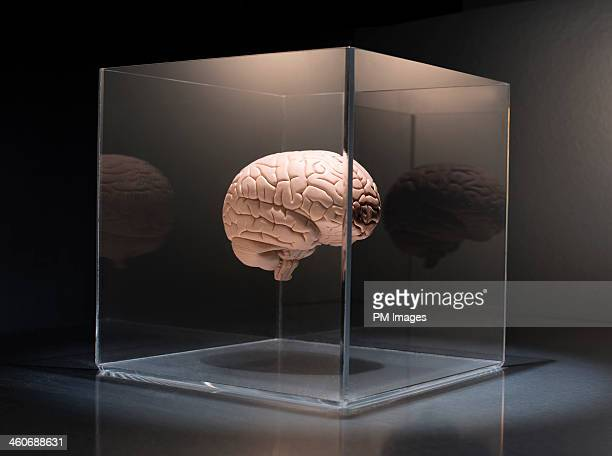 Brain in a box