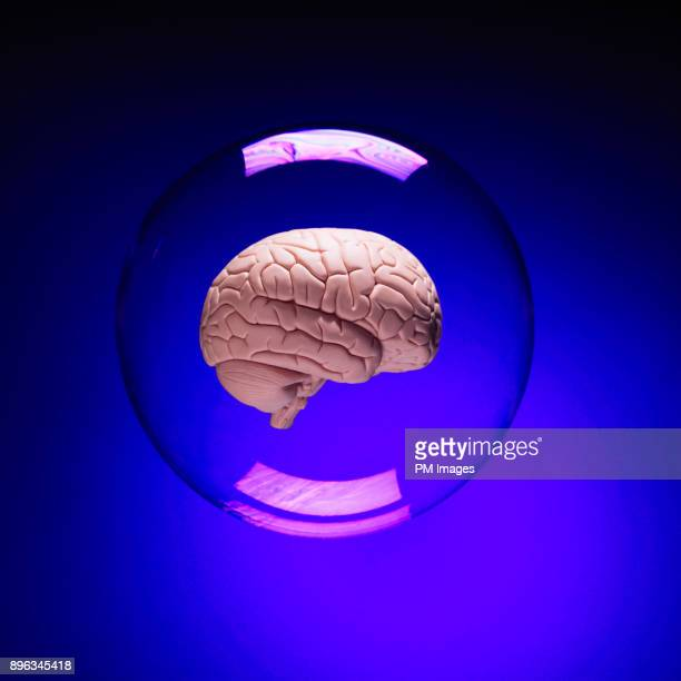 Brain in a bubble