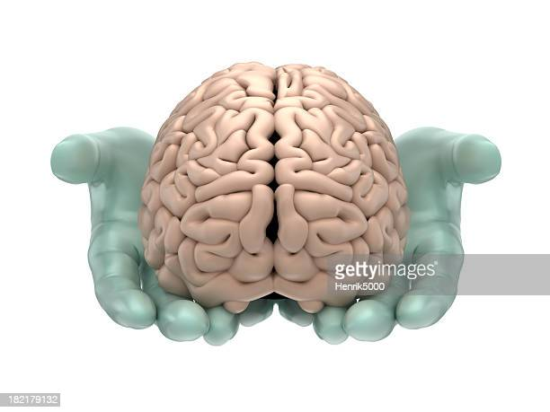 Brain in hands - isolated on white with clipping path
