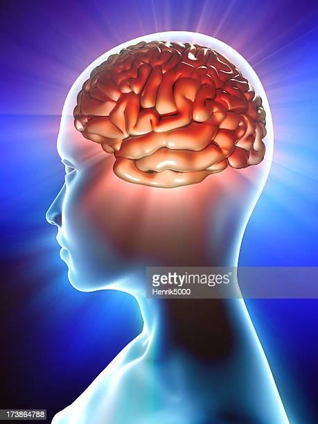 Brain inside profile of human