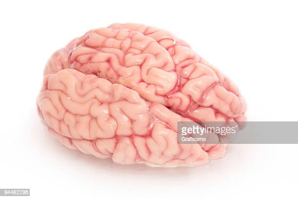 Gehirn, isoliert auf weiss