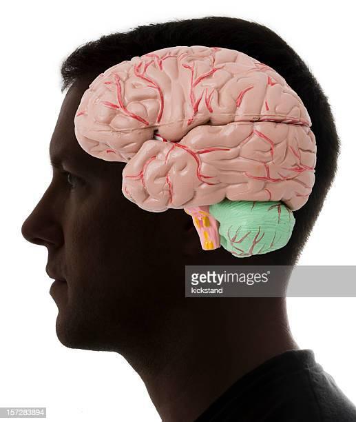 Gehirn auf den Geist