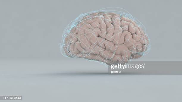 brain - cerebrum stock pictures, royalty-free photos & images