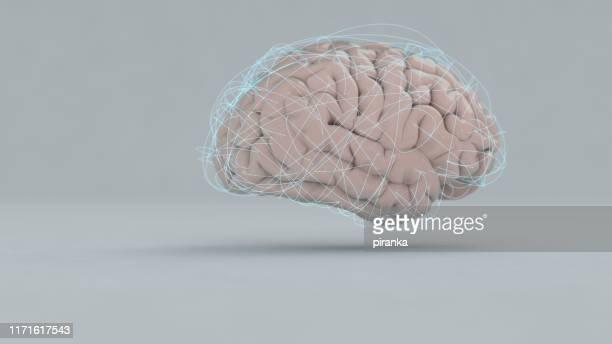 brain - cerebrum stock photos and pictures