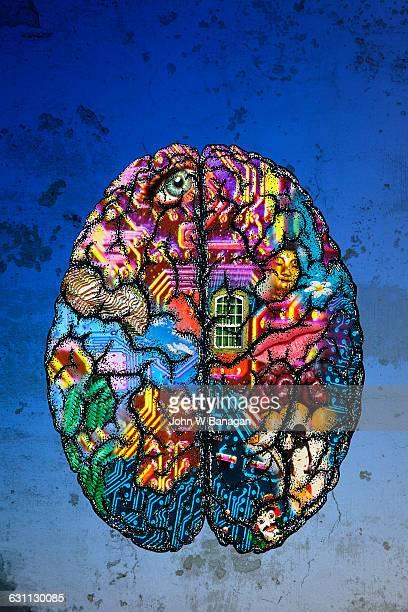 brain - human body part stock-fotos und bilder