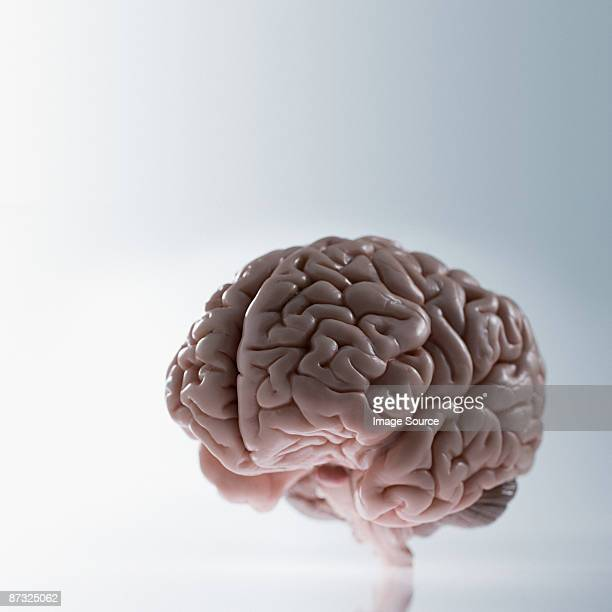 a brain - human brain stock pictures, royalty-free photos & images