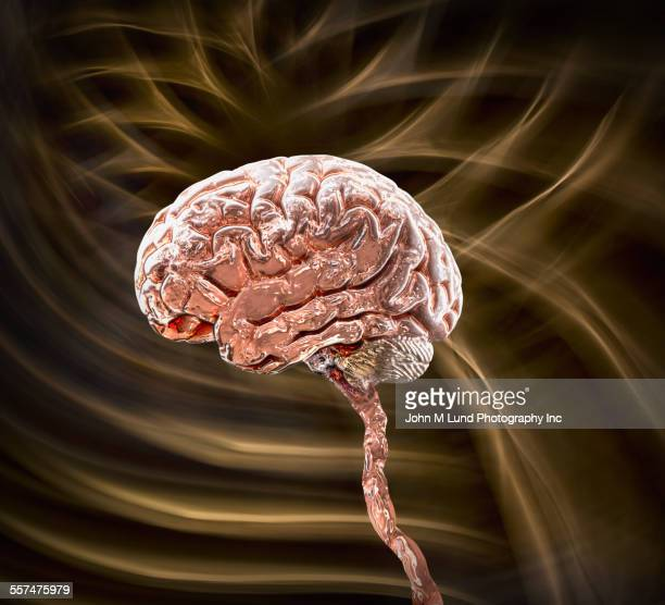 Brain stem floating against brown background