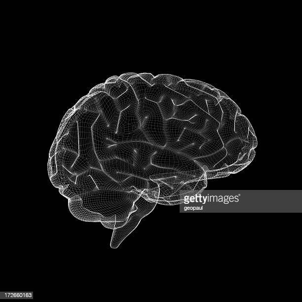 Gehirn Gitternetzlinien