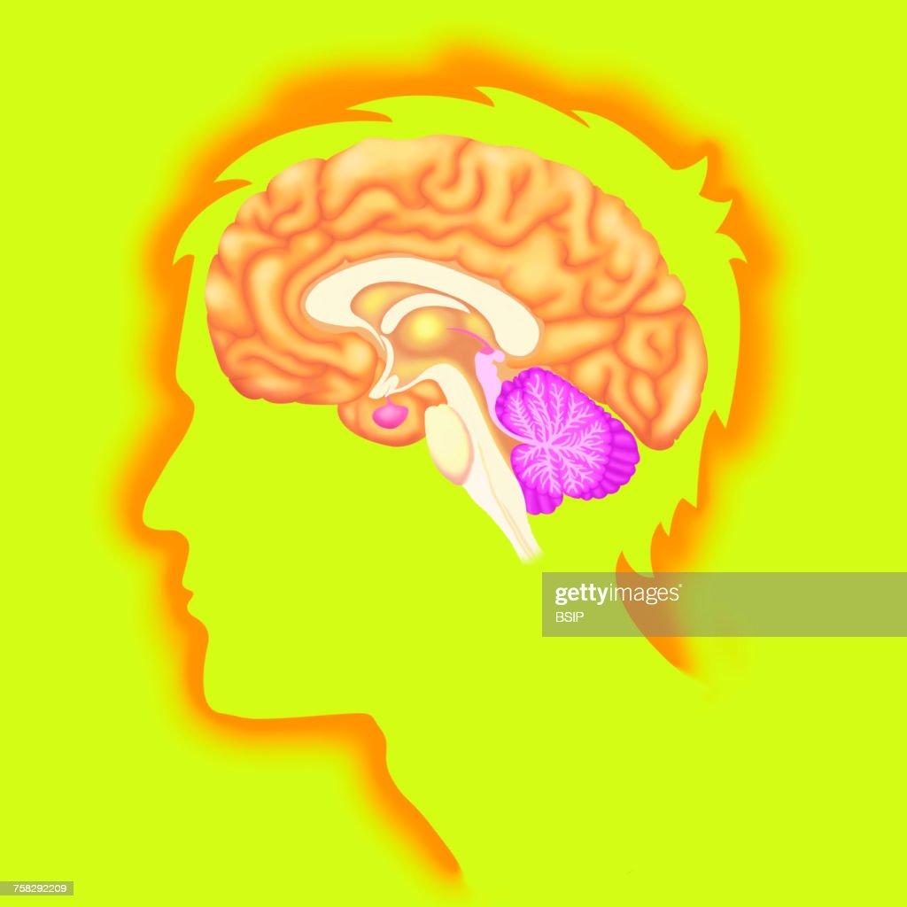 Brain,drawing : Stock Photo