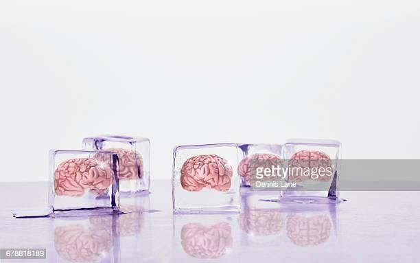 Brains frozen in ice cubes
