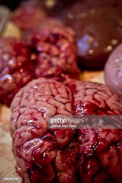 brains - joshua alan davis stock pictures, royalty-free photos & images