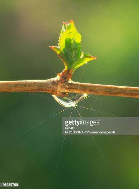 Branch growing a new bud