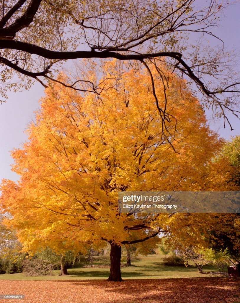 Branch in front of tree with leaves in West Virginia in autumn : Stock-Foto