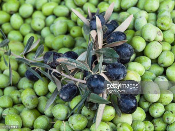 branch of black olives with leaves on heap of green olives - green olive stock photos and pictures