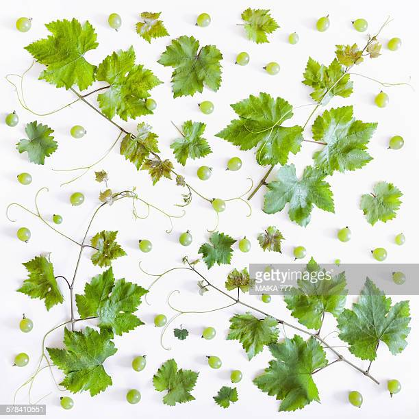 Branch of leaves from grape vine & grapes, pattern
