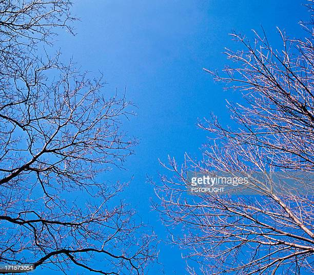 branch of trees in winter - fstoplight stock photos and pictures