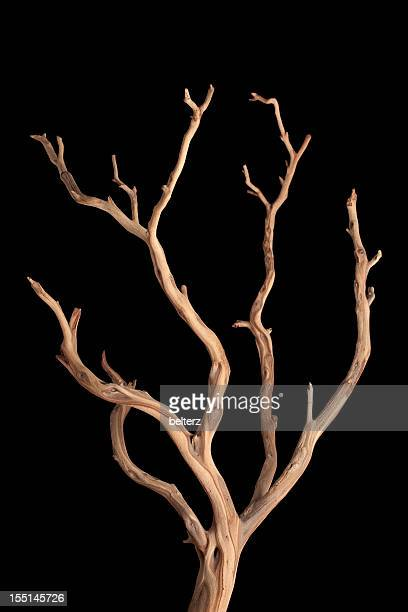 branch - branch stock pictures, royalty-free photos & images