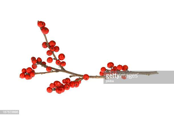 branch with red berries - twijg stockfoto's en -beelden