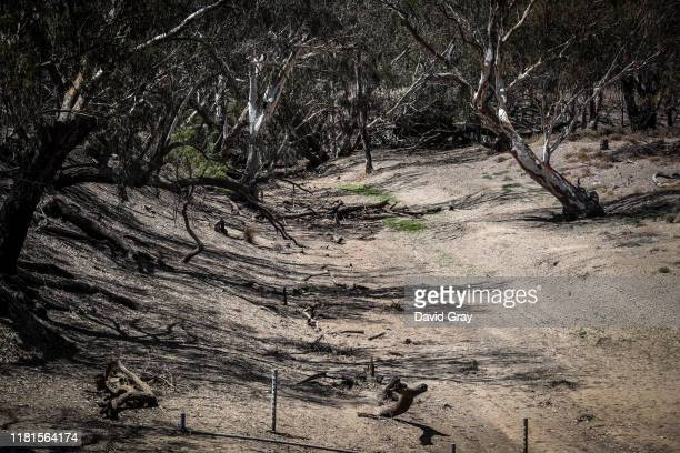 Branches and dying trees line the dried-up bed of the Mehi River, near the north-western New South Wales town of Collarenebri on October 7, 2019 in...