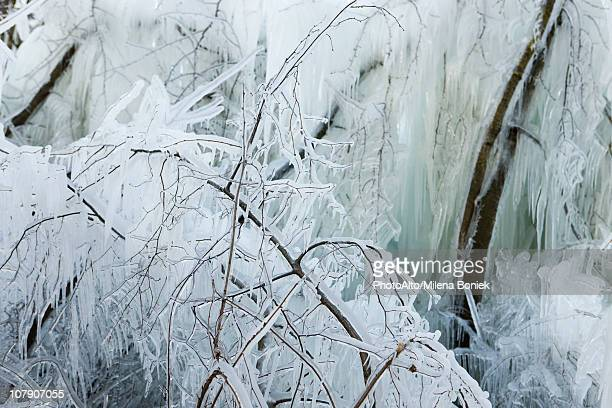 branches covered in ice - the four elements stock pictures, royalty-free photos & images