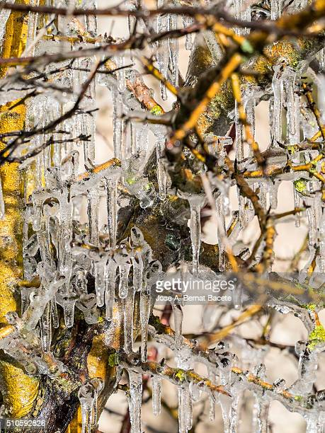 Branches of a tree without leaves with icicles of ice