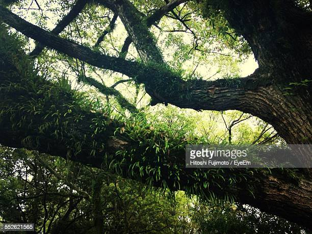 Branches Of Old Tree Grown With Green Plants