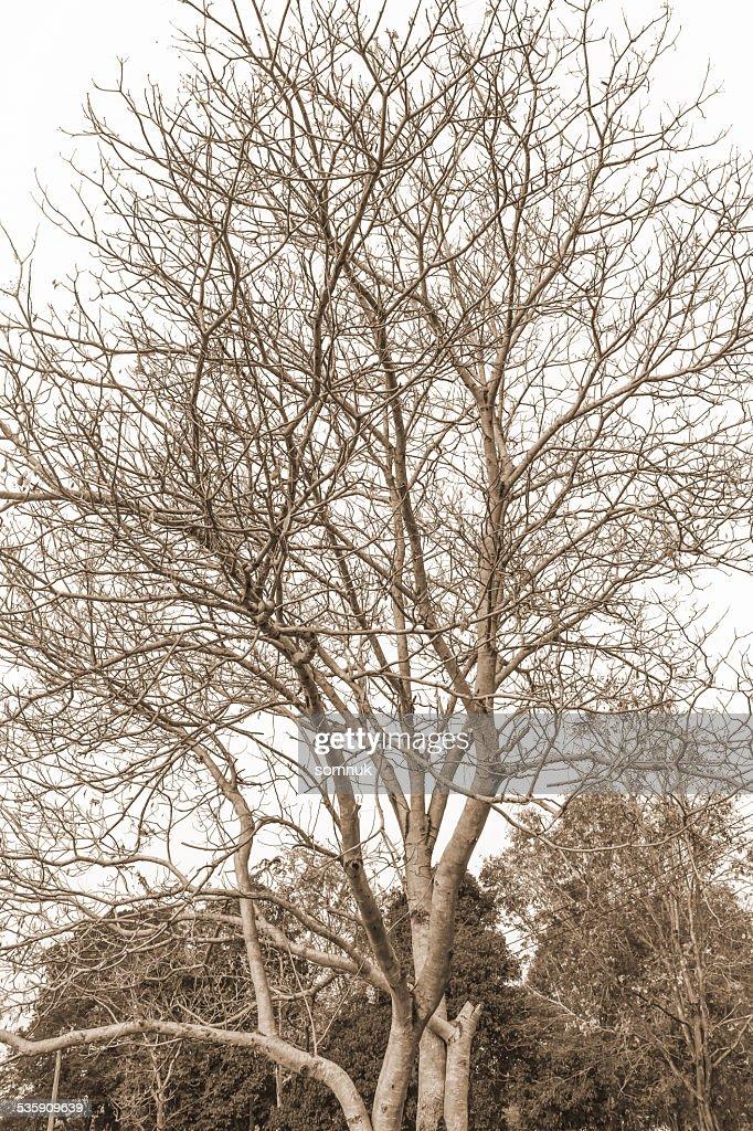 Ramas del árbol. : Foto de stock