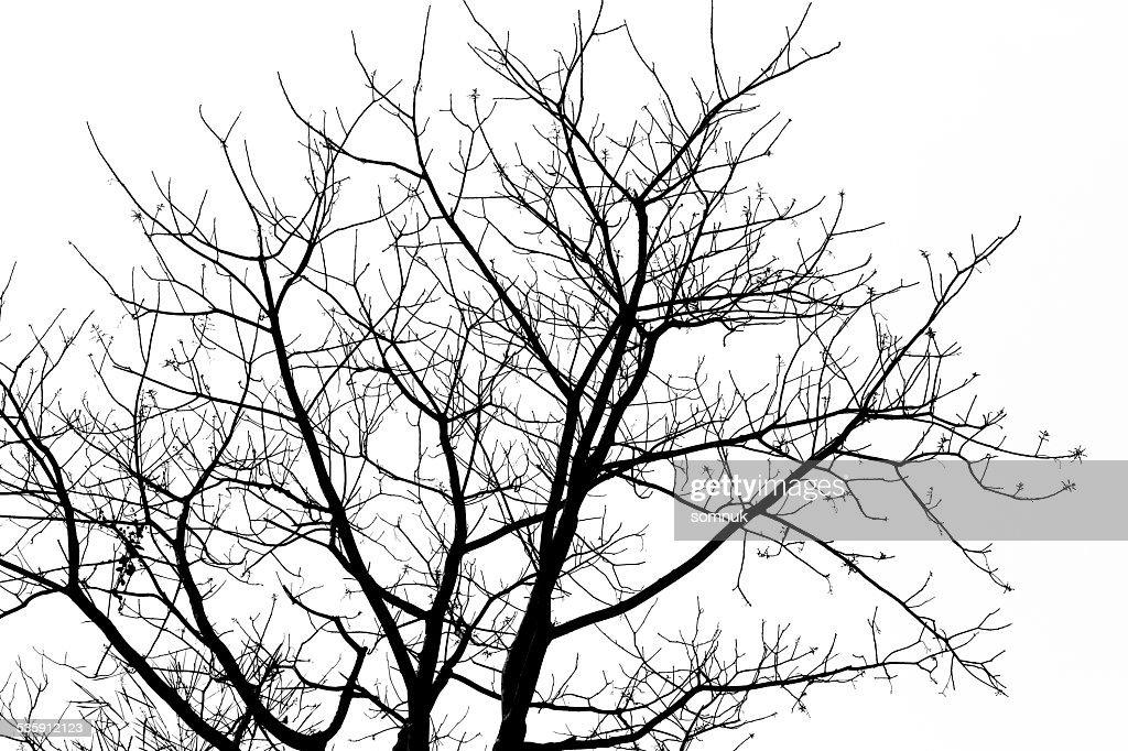 Ramos da árvore. : Foto de stock