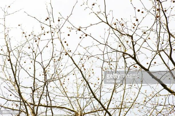 Branches of the tree