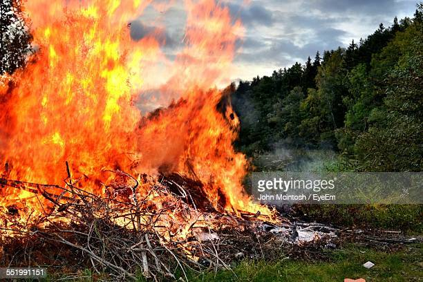 Branches Of Tree Burning In Forest