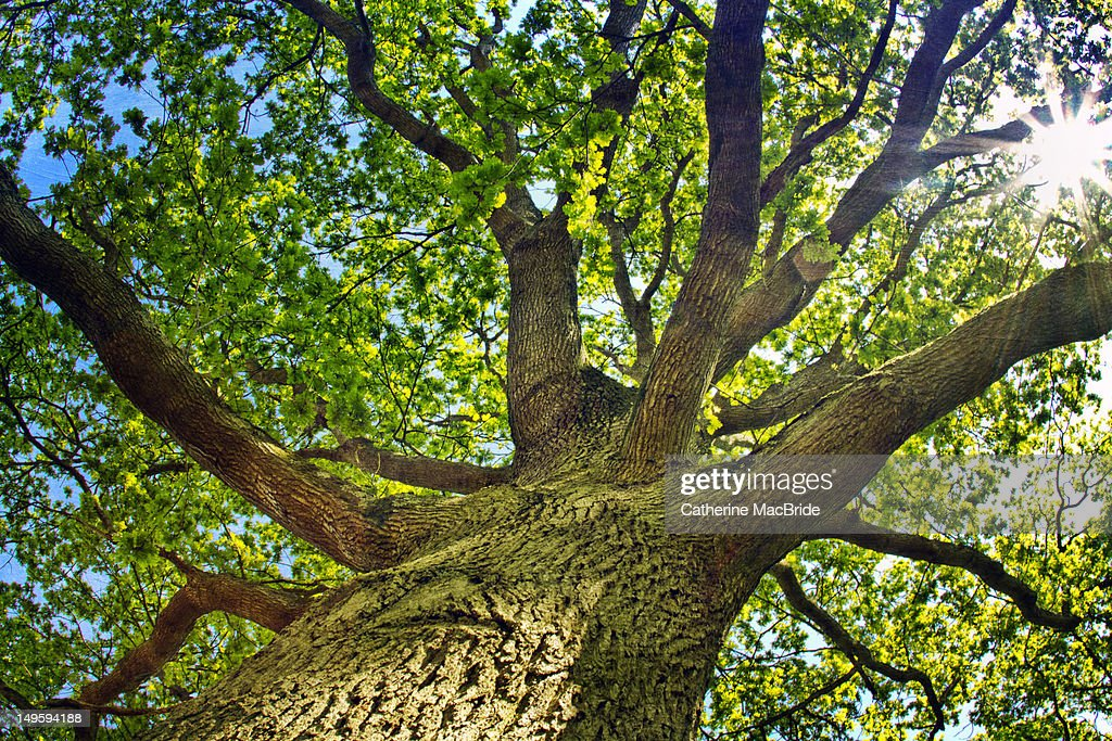 Branches of tree : Foto de stock