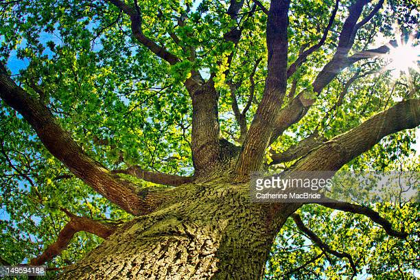 branches of tree - catherine macbride stock pictures, royalty-free photos & images