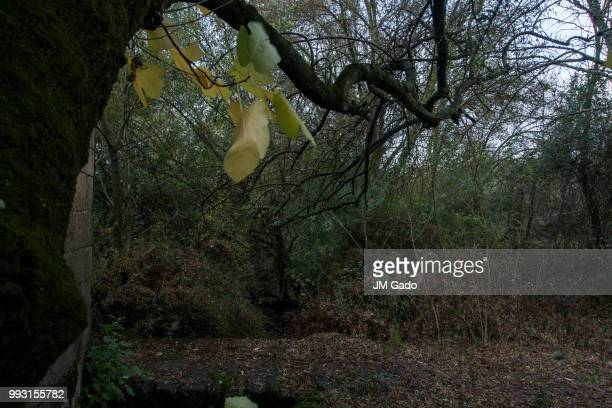 branches - gado stock photos and pictures