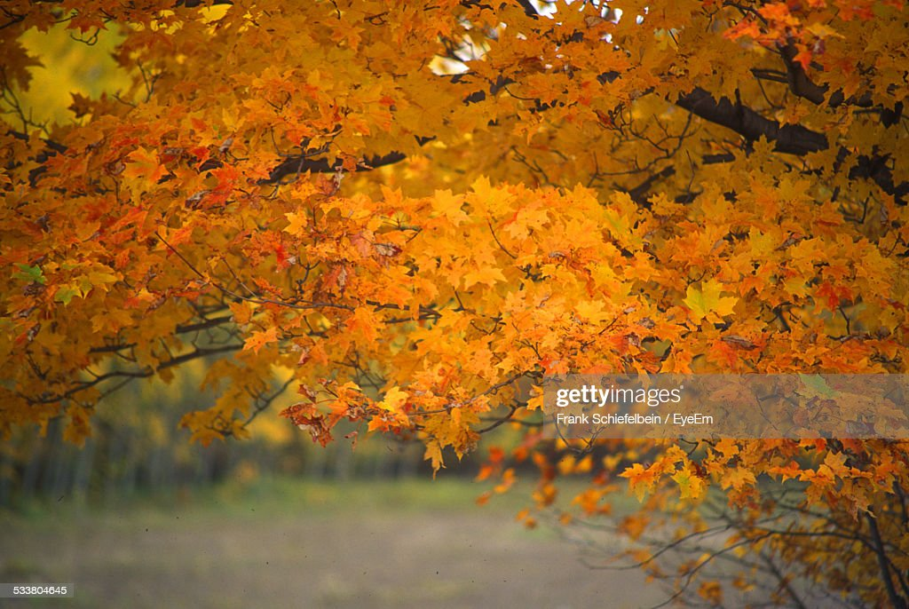 Branches With Autumn Foliage : Stock Photo