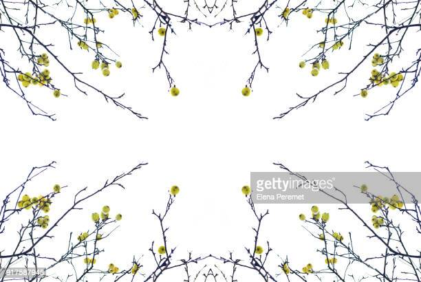 Branches without leaves with apples