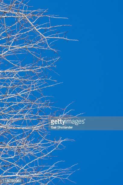 Branching In