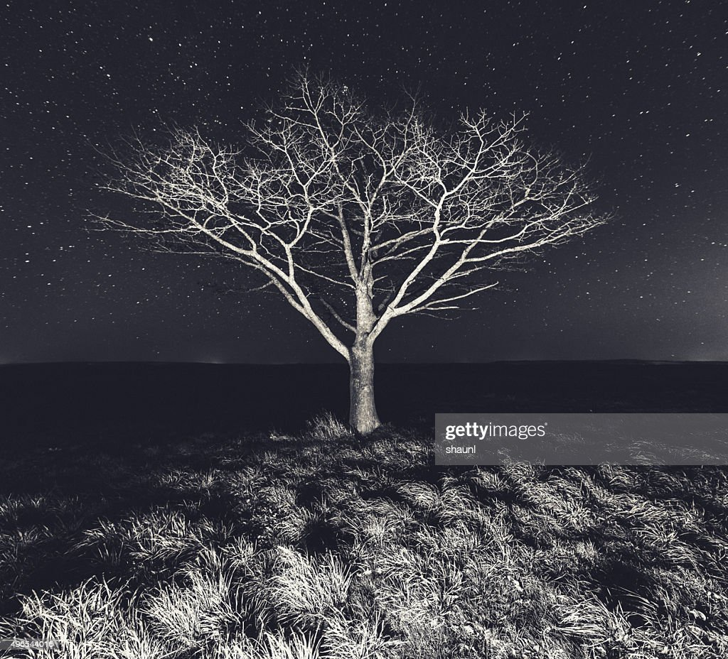 Branching Into The Stars : Stock Photo