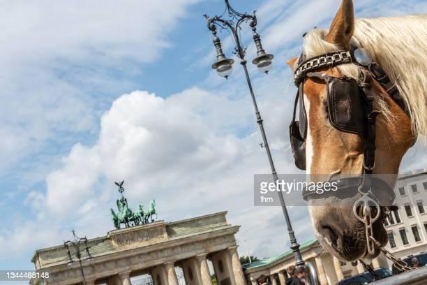 brandenburg gate with horse face (berlin, germany) - porta cittadina foto e immagini stock